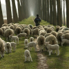 Овце и овчари